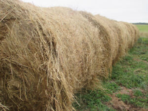 Hay for sale - round bales