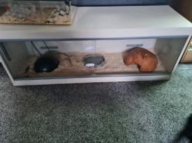 Ball python and set up