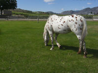 HORSE BOARDING and DOG KENNELS SERVICE