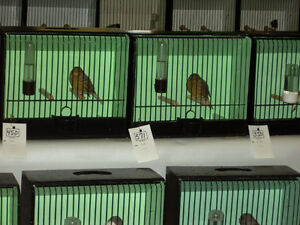 Annual Young Feather (bird) Show  Free  ADMISSION