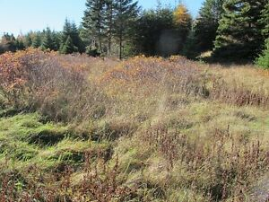 For sale 1.84 acres of land in lovely in Chapels Cove, NL St. John's Newfoundland image 4
