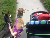ORILLIA DOG WALKING
