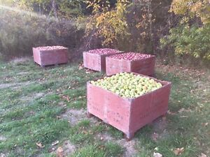 Ground apples for sale. $80 a bin. Farm fresh! Peterborough Peterborough Area image 3