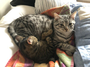 Young cats for rehoming