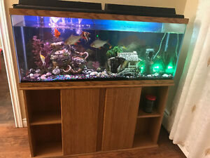 HUGE FISH TANK WITH FRESH WATER FISH AND ALL ACCESSORIES