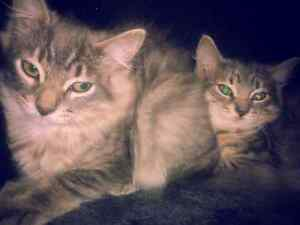 5 month old kittens
