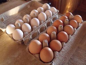 Free range, farm fresh eggs!