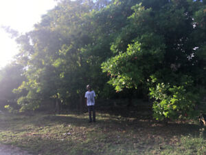 LAND FOR SALE IN WESTEND NEGRIL, JAMAICA