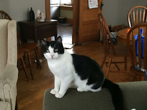 FREE 1 yr old, neutr'd cat. Amazing with kids, great personality