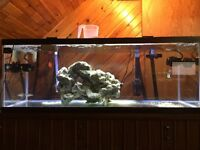70 Gal Fish tank with full equipment for salt water fish