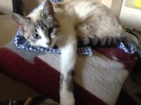 Female cat looking for home