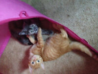 FREE. 2 lovely kittens with lots of accessories including food