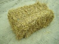 Straw for sale - square bales