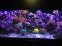 125 gallon and 90 gallon saltwater reef tanks partout