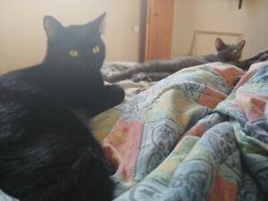 Kitties that need rehome!