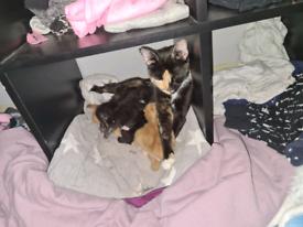 4 male kittens