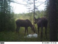 Camp de chasse orignal zone 13