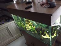 3ft aquarium full setup