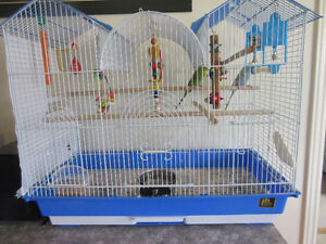 2 Female Budgies with Cage and Supplies