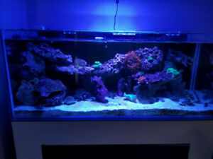 Saltwater Fish, coral, rocks, sand for sale - Entire Lot $800
