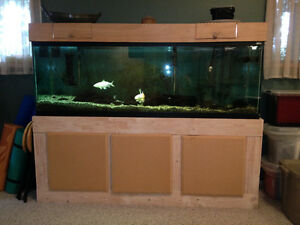 Big Beautiful Aquarium - great for ocean or fresh water fish