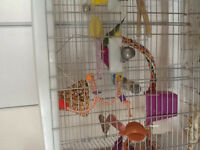 Owl finch with cage