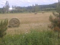 Foin sec en balle ronde 4x4 2015 a l'abris chevaux moutons vache