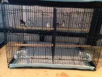 11 pinsons  avec 2 cages de reproductions