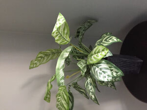 Lovely silk plant to dress up or add to a vignette.