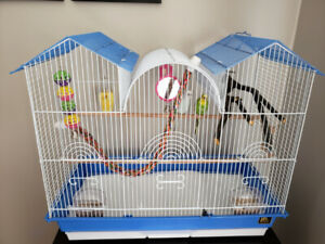 2 budgie birds to rehome