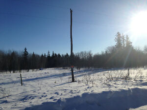 Land for sale. 20 acres treed