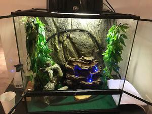 Chameleon for sale