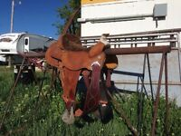 "15.5"" Roping Saddle ***REDUCED***"