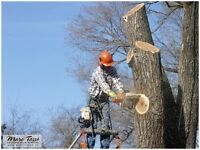 Emondage /Tree services