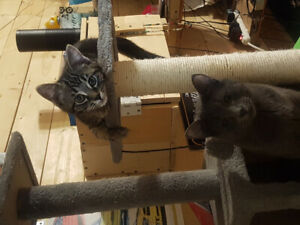 2 cats free. 1  5 month old and 1 3 month old male and female