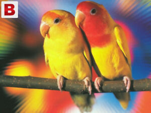 lutino lovebird for sale at T T pets