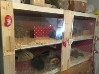 GUINEA PIG HUTCH-x2 TIERED 5FT-HAND MADE-SUPERB QUALITY-BARGAIN!!!-MUST SEE!!!
