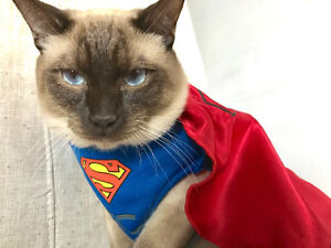 Siamese Cat in Need of a Furrever Loving Home