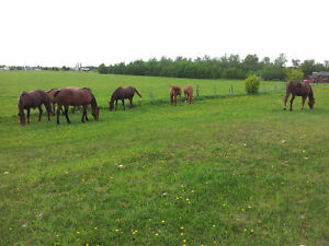 Horse setup with 5 bedroom bungalow close to Sherwood Park.