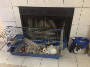 Dwarf Bunny Plus Cage, Toys and Bowl for sale Kitchener / Waterloo Kitchener Area image 5