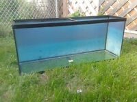 60 gallon fish tank + heater + filter