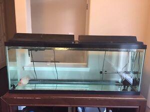 50 gallon fish tank for sale.