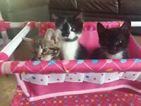 3 beautiful kittens looking for there forever loving home
