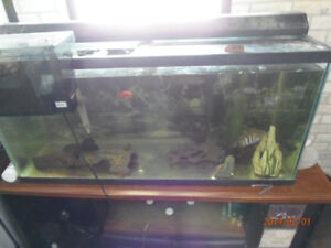 fish tank for sale or trade