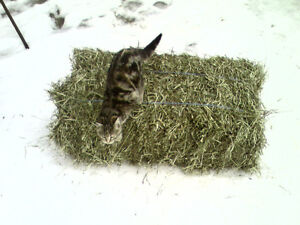 3rd Cut Hay for Sale