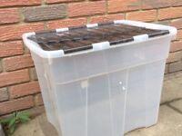 Extra Large Plastic Storage Boxes X 5