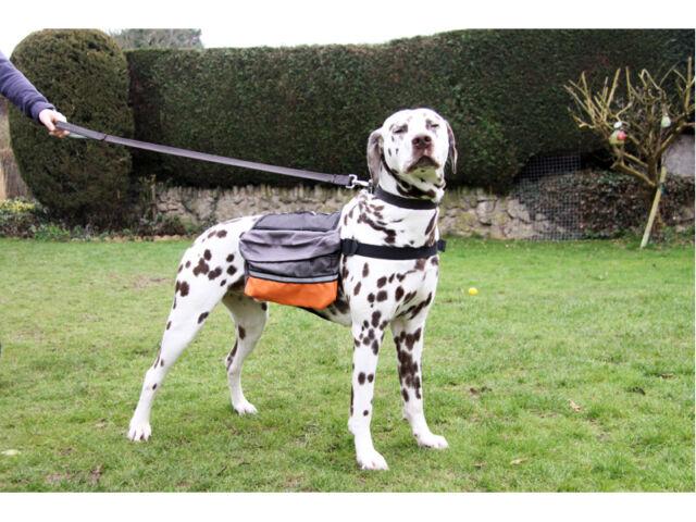 Options Travel Dog Backpack