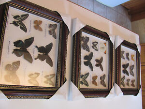 3 pictures of mounted butterflies - $15 each or 3 for $40