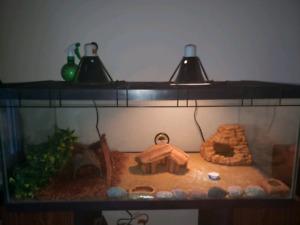 40 g. Terrarium. PLUS 3 geckos