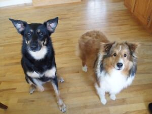 Walk & feed my dogs for 1 week Cobequid Rd., First Lake Dr.